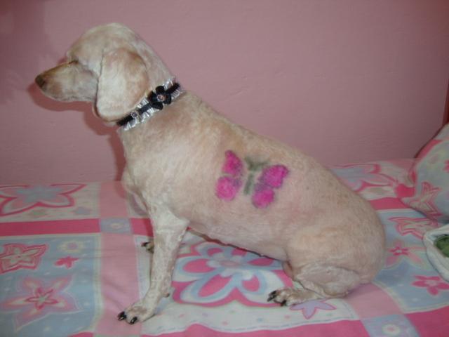 Deputados aprovam proibição de tatuagem e piercing em cães e gatos