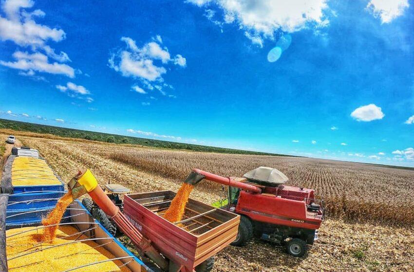 Dez cidades produzem R$ 4,5 bi do valor da cultura agrícola do Piauí